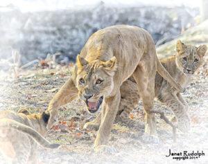 lion314 15