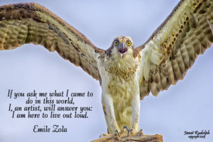 Osprey with Zola quote