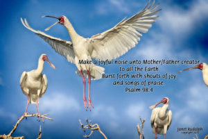 Spoonbills dancing with Psalms quote