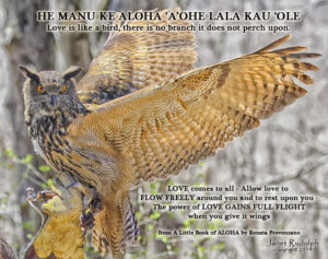 Great Horned Owl with Aloha quote