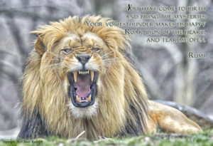 Lion with Rumi quote