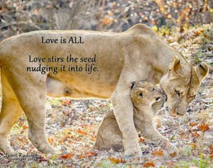 Lion Love  Janet Rudolph
