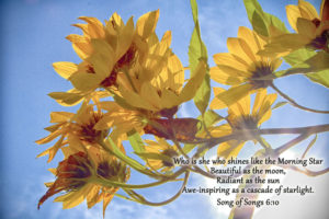 Sunflowers with Biblical quote - Janet Rudolph