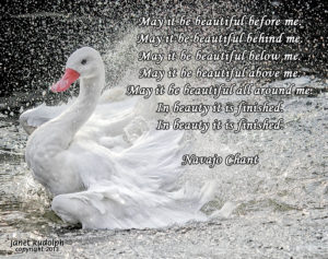 Swan with Navajo Chant